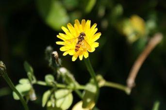 74245-Bee-Landing