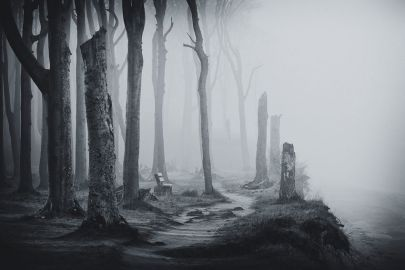 71712-Haunting-Forest