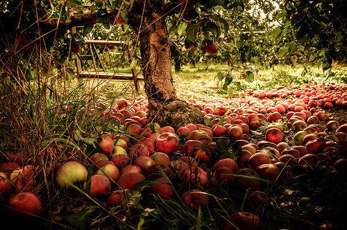 283151-Apple-Tree
