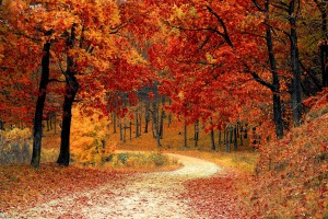 autumn-colorful-colourful-33109 (1)