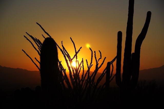 cactus-84709_640