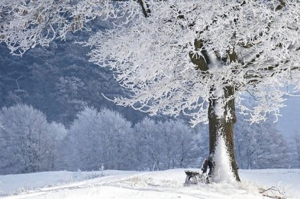 winter-4680354_640