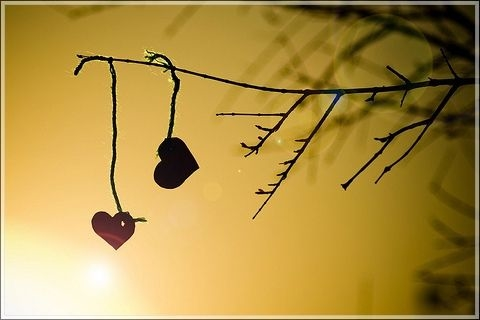 121993-2-Hearts-On-A-Tree-Branch