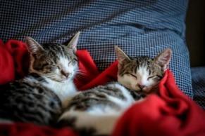 329292-Sleeping-Cats