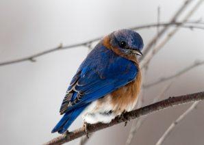 animal-beautiful-birdwatching-792416