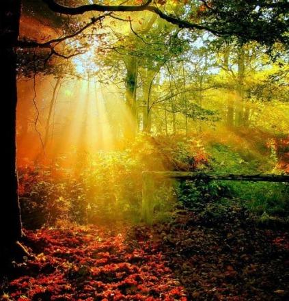 134560-Autumn-Spotlight