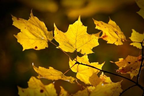 116212-First-Leaves-Of-Autumn