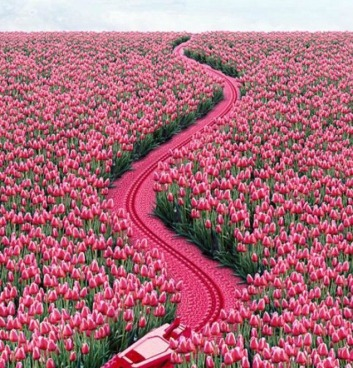 254309-Follow-The-Hot-Pink-Road