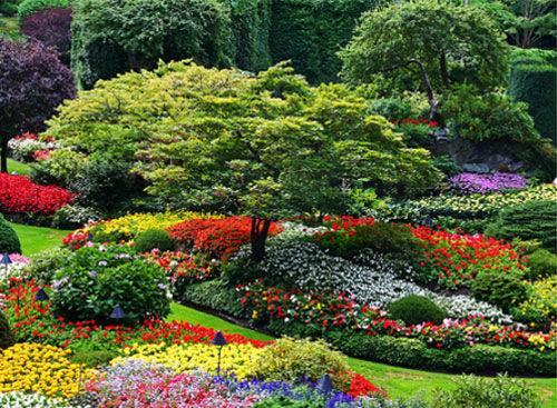 254317-Colorful-Landscaped-Garden