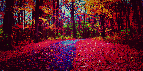 124820-Colorful-Autumn